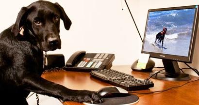 Dog on Computer photo